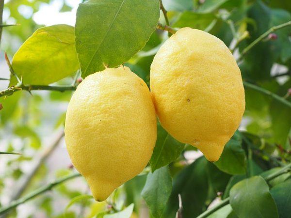 citron - Déesse